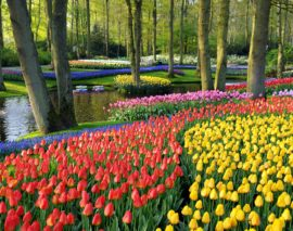 Keukenhof March 20, 2021 –  May 9, 2021