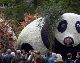 Bulb Flower Parade 13 APR 2019
